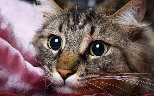 Народные приметы и суеверия о кошках, кошачий сонник