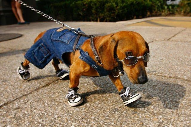 Не заводите собаку! - собачий юмор, анекдоты и приколы