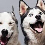 Подробный Зодиакальный гороскоп для собак, часть 1