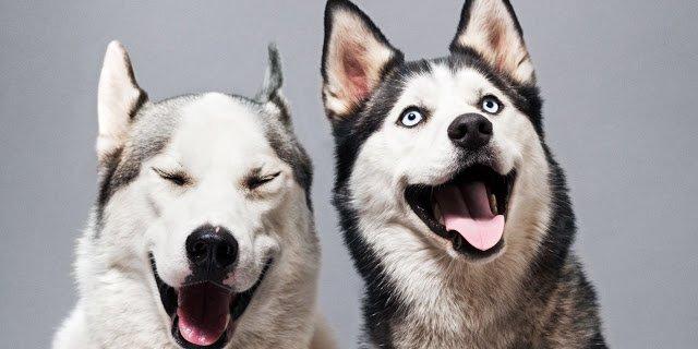 Подробный зодиакальный гороскоп для собак