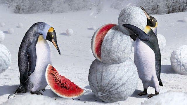шуточные стихи про зиму, анекдоьы про зиму, приколы про зиму, шутки про зиму, юмор про зиму, юсор зимний, приколы зимние, смешное про зиму, цитаты зимние, про зиму, про зимние месяцв, про зимние забавы, интересное про зиму, частушки про зиму,