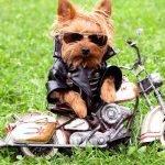Почему собаки… Собачьи вопросы с ответами