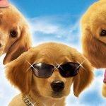 Фильмы о собаках и волках