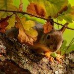 Дарит осень чудеса! Осенние стихи для детей