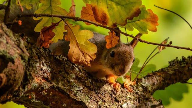 осень, про осень, стихи осенние, осень в стихах, стихи, лирика, ангелы осени, дождь, листопад, времена года, грусть осенняя, листья желтые, краски осени, дыхание осени, осенний вечер, стихи про осень, рыжая осень, девочка осень, любовь осенняя, чувства, эмоции, природа, погода, сезоны, сезон осенний,