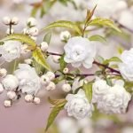 Народные приметы и суеверия на весенние месяцы