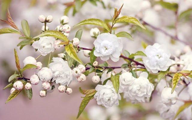 Народные приметы и суеверия на весну и весенние месяцы