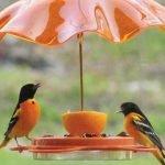 Позаботимся о наших пернатых друзьях — фото идеи птичьих кормушек