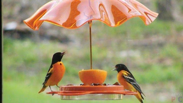 Позаботимся о наших пернатых друзьях - как сделать кормушки для птиц