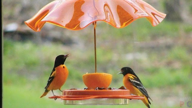 Позаботимся о наших пернатых друзьях кормушки, кормушки для птиц, для птиц, птичьи кормушки, для пернатых, осень, зима, домики для птиц, еда для птиц, кормушки из подручного материала, для зимы, семечки, орехи, зимовка птиц, птичья столовая,