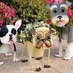 Цветочный гороскоп для собак