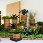 Домашние растения — советы по уходу
