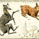 Зодиакальный гороскоп вашей собаки