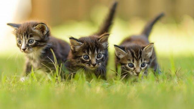 кошки, про кошек, про котов, кот, котенок, жизнь кошек, физиология кошек, домашние питомцы, животные, домашние животные, интересное про кошек, сведения о кошках, животные, питомцы, информация о кошках, кошачьи привычки, кошачья жизнь, человек и кошка, как понять кошку, любовь к кошкам, кошачья жизнь, все про кошек, полезное про кошек, интересные факты о кошках,