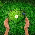 Энергетические, магические и обережные свойства растений: где и как использовать
