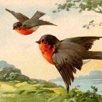 "Катарина Кляйн (Catharina Klein, 1861 - 1929) - Главная ""Цветочница"" Германии. Птицы и бабочки"