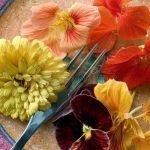 Какие цветы можно есть? А главное — зачем???