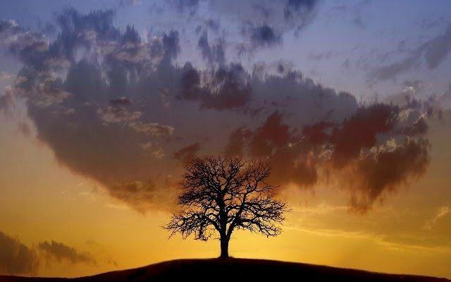 Яра Рута (Iara Ruta) манипулирование, обязанности, желания, психология, удобство, отношения, семья, роль, помощь, спасение, жертва, комплексы,