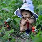 А пойду-ка в огород! - садово-огородные стихи для детей